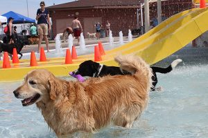 Discovery Bay's Doggie Day @ Discovery Bay Waterpark | Greeley | Colorado | United States